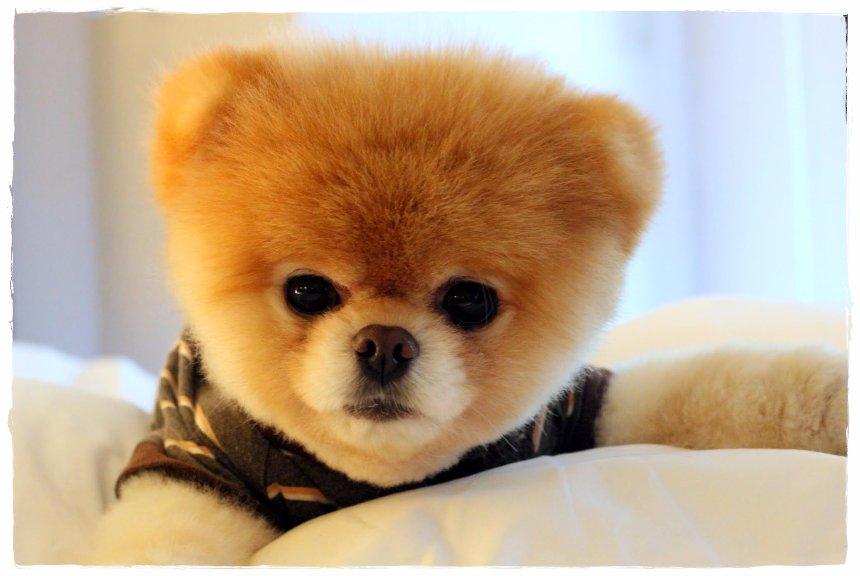 Ученые доказали, что владельцы собак живут дольше