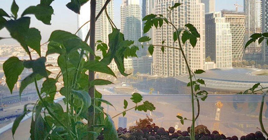 В ОАЭ обустроили первую вертикальную ферму