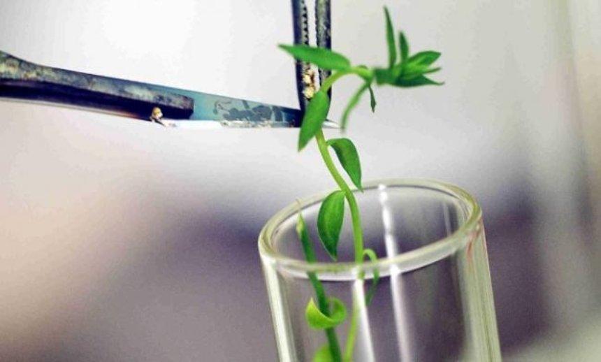 Специалисты подсчитали достижения биоинженеров