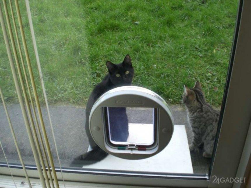 Создана умная дверь для животных