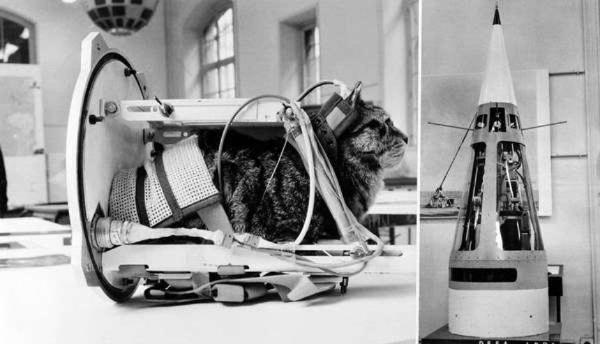 Показана кошка, которая побывала  космосе