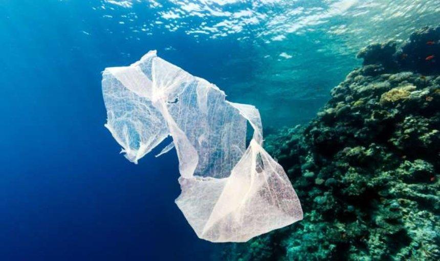 Ученые предупреждают: пластик массово инфицирует кораллы