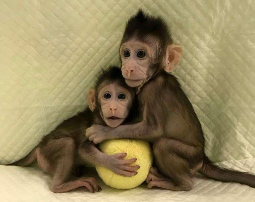 Овцы клонированы, обезьяны клонированы..Что ждет человека в будущем?