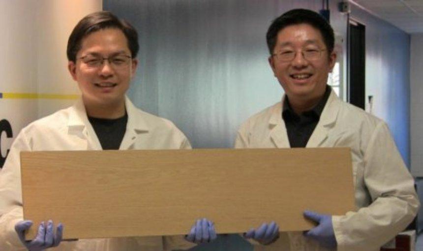 Ученые создали дерево, которое прочнее стали