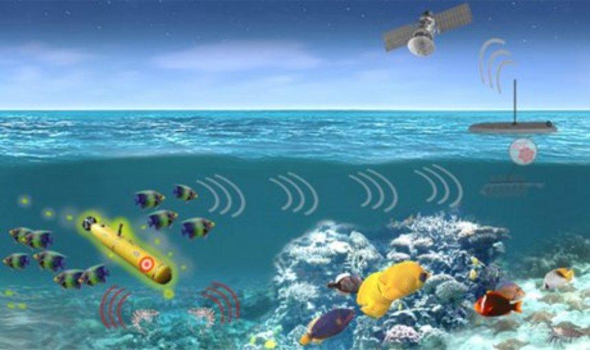 Американский флот будет обнаруживать подлодки с помощью обученных морских животных