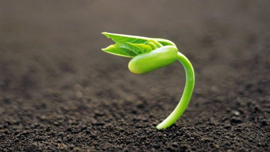 Растения появились на Земле раньше, чем все думали