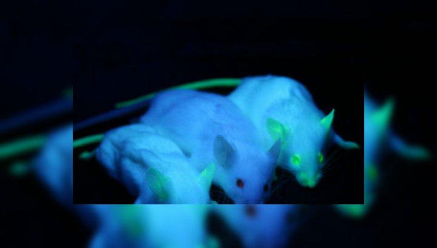 Ученые создали имплантанты, которые сделали слепых мышей зрячими