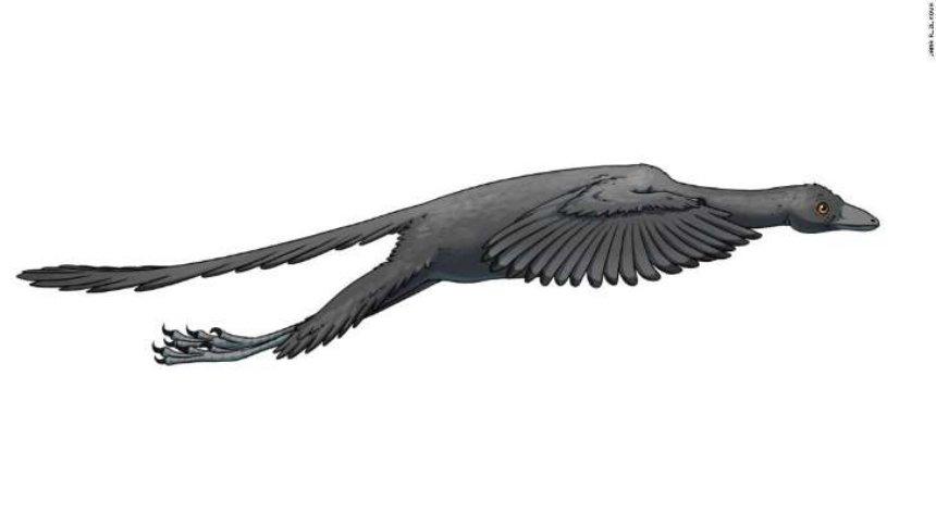 Ученые наконец-то узнали, мог ли летать динозавр археоптерикс