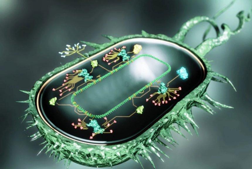 У бактерий есть особая память, о которой раньше не догадывались