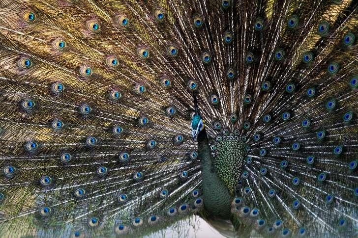 Сексуальность может привести к вымиранию видов животных, - ученые