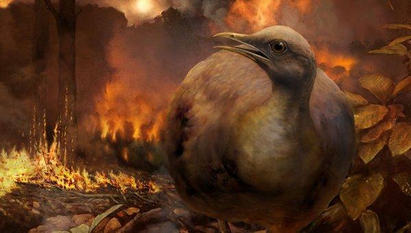 Ученые знают, как птицы пережили падение на Землю астероида-убийцы