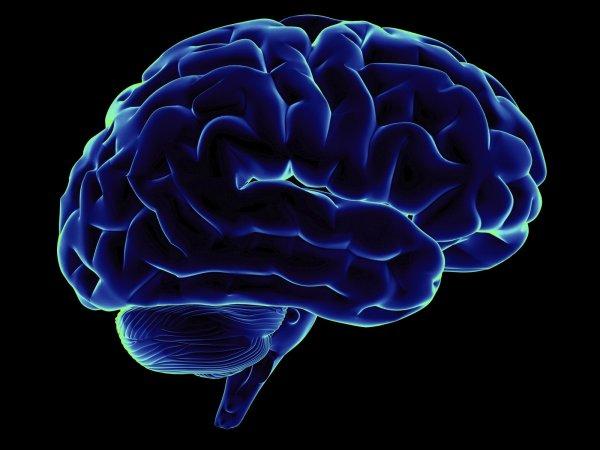 Ученые смогут бороться с болезнями мозга при помощи белка