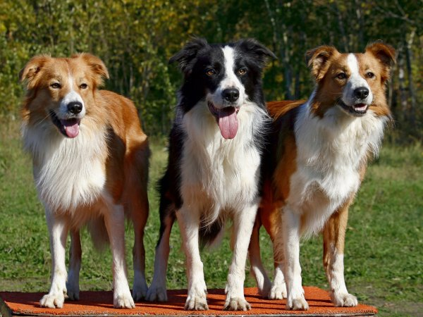 Ученые заявили об опаснейшем вирусе, исходящего от собак