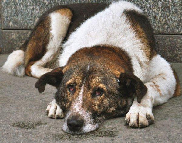 Ученые обнаружили схожие особенности между полными собаками и людьми