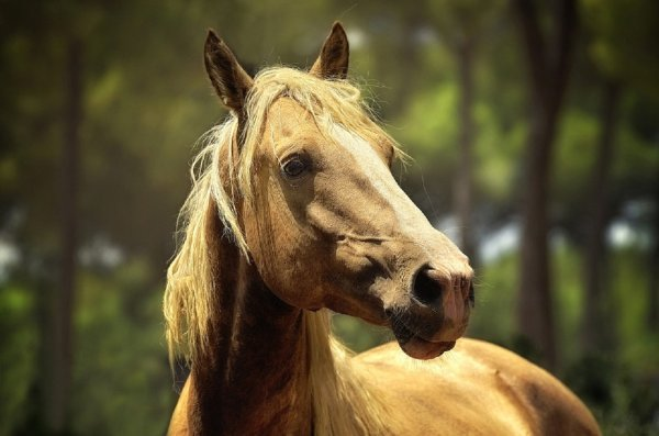 Ученые разобрались, как изучать язык животных для правильного понимания