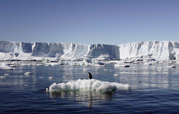 Ученые сообщили причину скорой пропажи Антарктиды