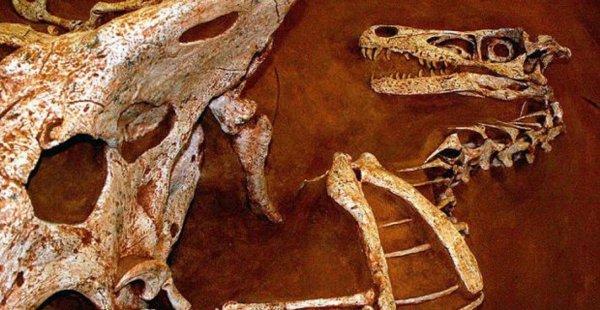 Чупокабра или динозавр? Чилиец случайно наткнулся в лесу на странные останки