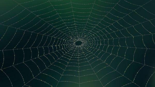 Ученые считают, что домашние пауки выполняют очень важную функцию