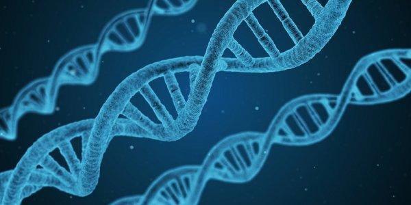 Ученые: Ген APP связывает болезнь Альцгеймера с синдромом Дауна