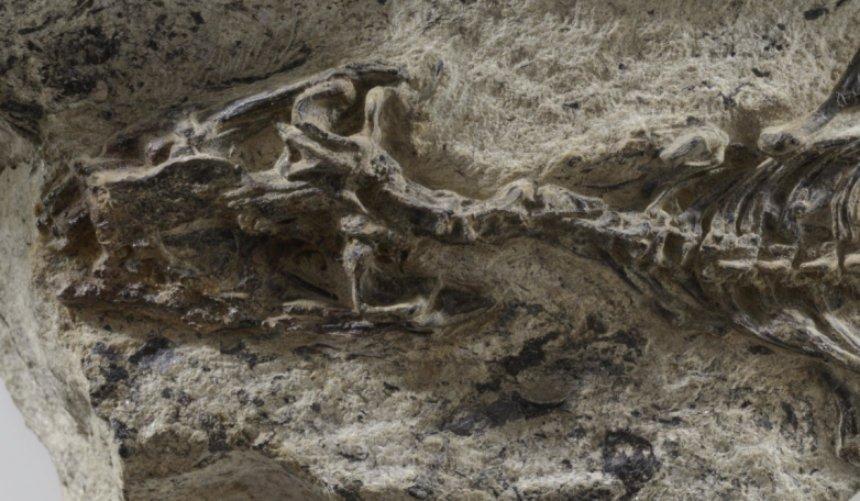 Ученые открыли в Альпах «Мать всех ящериц»