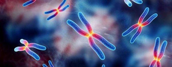 Учёные изучили мутировавший ген TRAF7, ставший причиной сложных заболваний