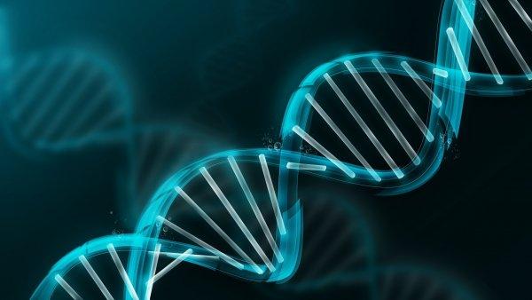 Ученые открыли важнейший для иммунитета ген, возрастом 500 млн лет