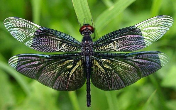 Ученые разобрались, почему стрекозы летают задом наперед