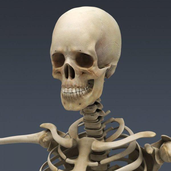 В Линкольне найдены три прекрасно сохранившихся римских скелета