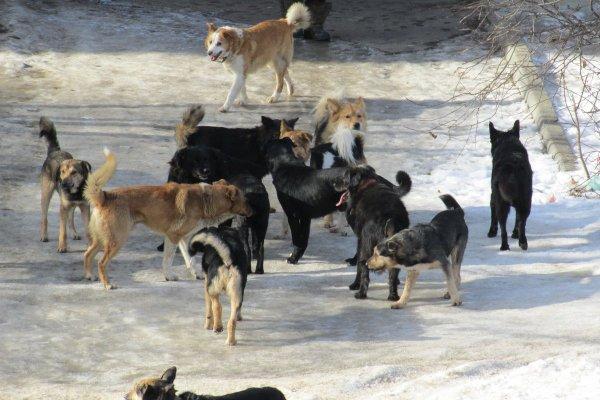 Ученые: Собаки менее склонны к перемирию, чем их собратья-волки