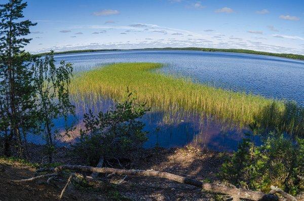 Химики поняли, отчего озера Карелии светятся