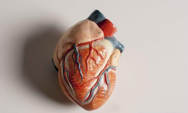 Учёным впервые удалось создать 3D-модель желудочка сердца человека