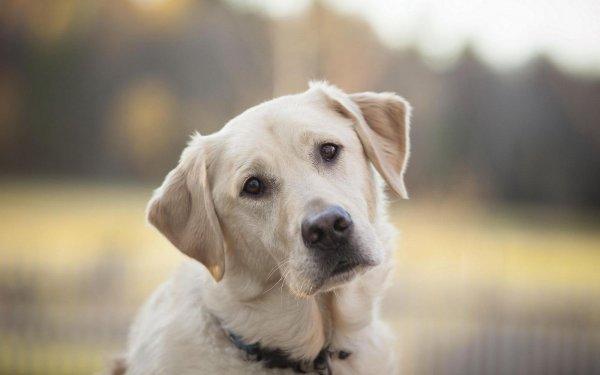 Ветеринары объяснили, что на самом деле означает возраст кота или собаки