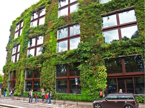 Для уменьшения стрессов психологи рекомендуют озеленить города
