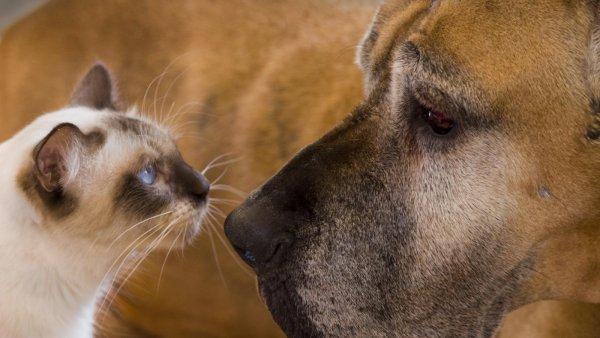 Ученые выяснили, кто виноват во вражде кошек и собак