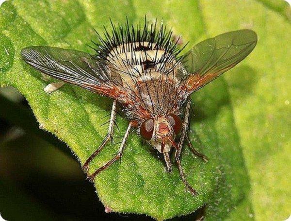 Ученые: Эволюция насекомых связана со способностью различать запахи