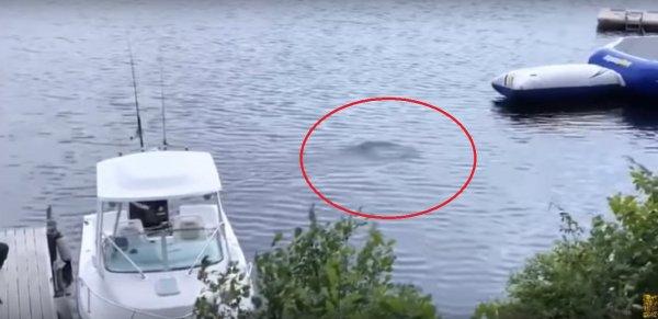 Морское чудовище: В США людей напугал неизвестный мистический объект