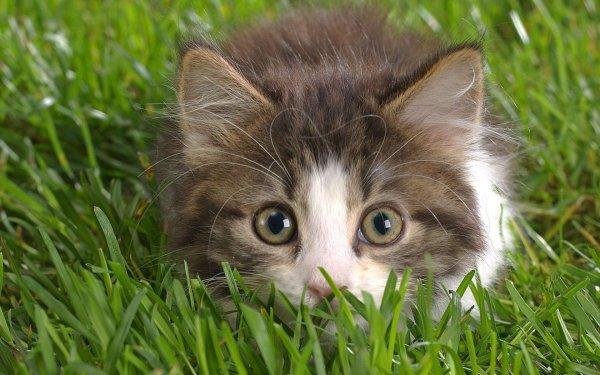 Домашние котики положительно влияют на здоровье мужчин