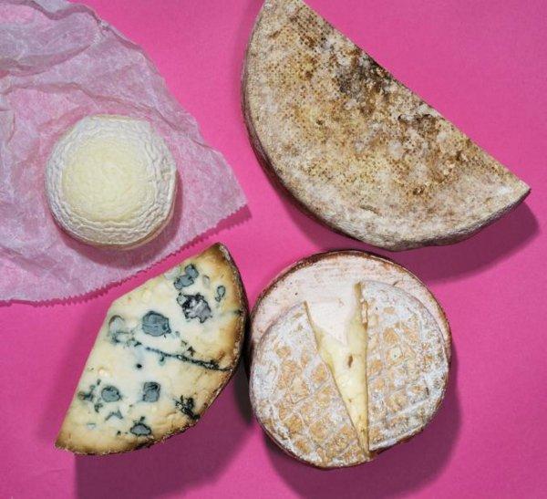 Учёные: Сыр с плесенью поможет совершить прорыв в медицине