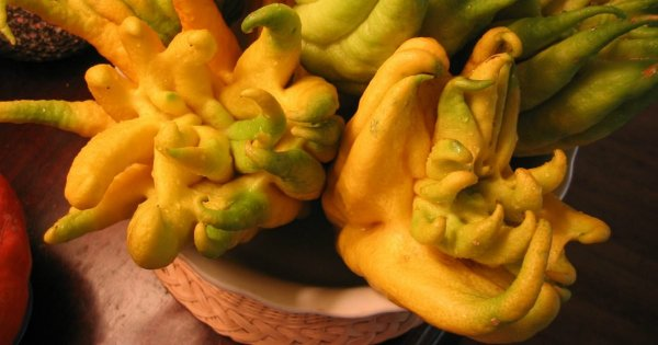 Ученые окрыли новый фрукт, способствующий похудению