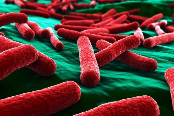 В Австралии ученые нашли устойчивые ко всем антибиотикам бактерии