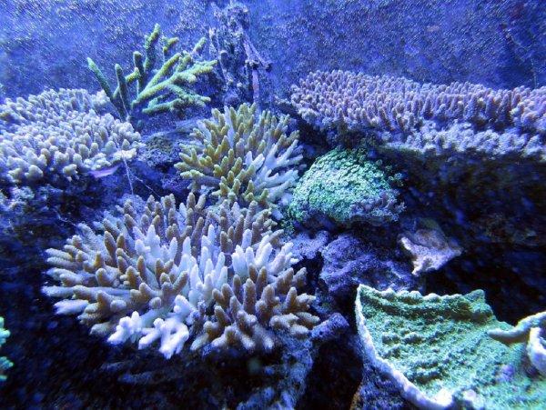 В океанских водах близ Панамы ученые нашли новый вид кораллов
