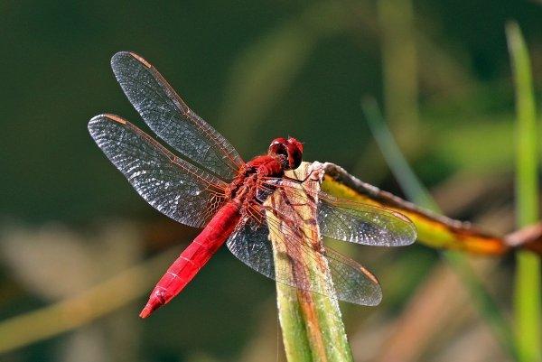 Математика объяснит технологию образования рисунка на крыльях стрекозы