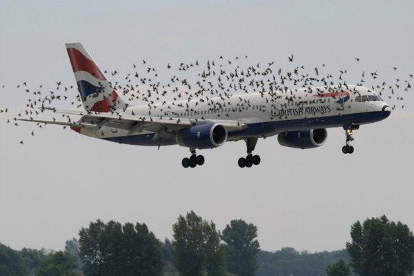 PLoS One: учёные нашли способ спасти самолёты от птиц
