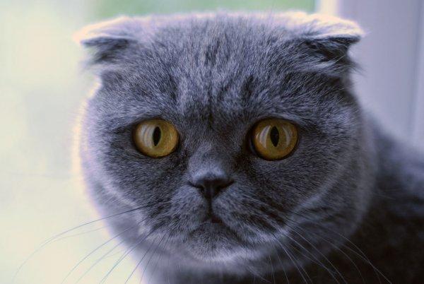 На выпуск «умного» туалета для котов собрали $500 тысяч за три дня