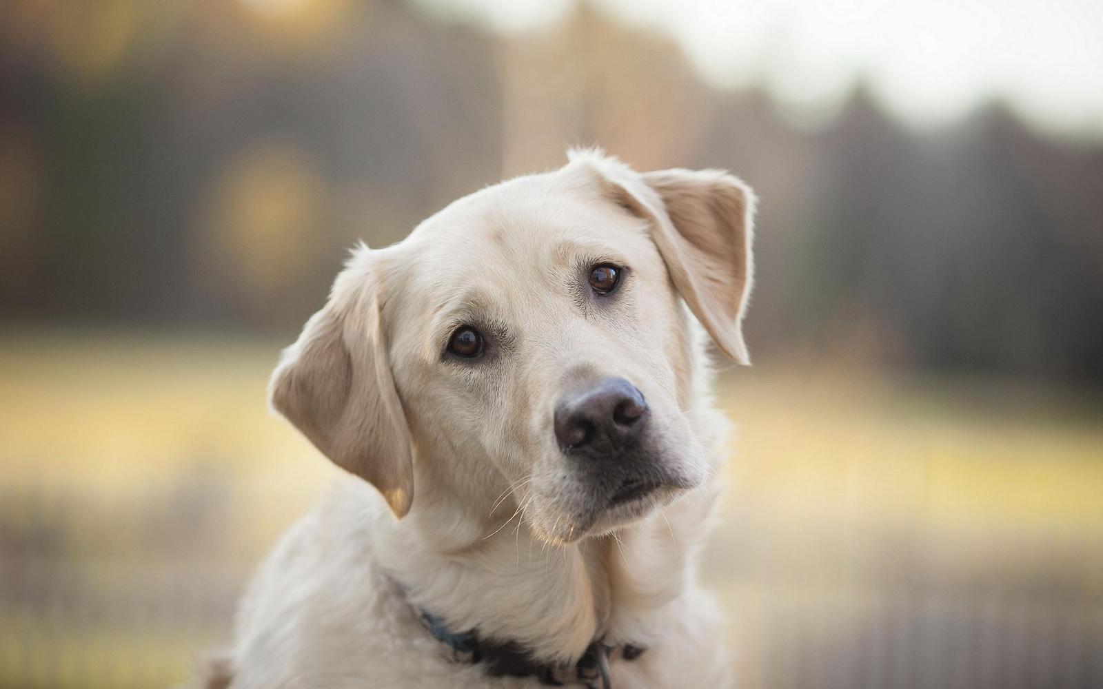 Признаки лишая у собак и эффективное лечение в домашних условиях
