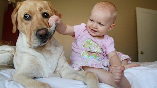 Ученые рассказали о пользе домашних животных для здоровья детей