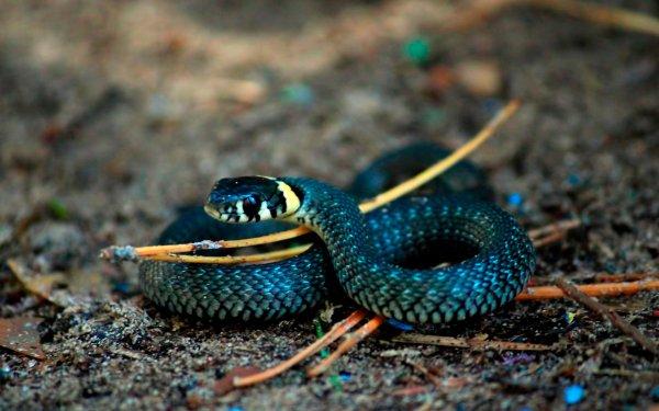 Из желудка змеи извлекли новый уникальный вид змей