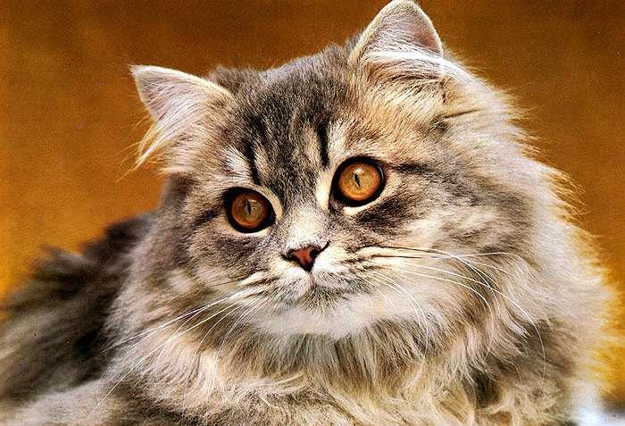 Как лечить ХПН у кошек