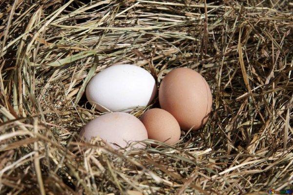 Ученые: Яйца помогут понизить артериальное давление и сбросить вес