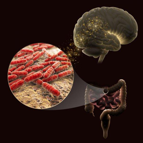 Кишечные бактерии способны влиять на настроение